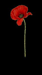 Remebrance Poppy
